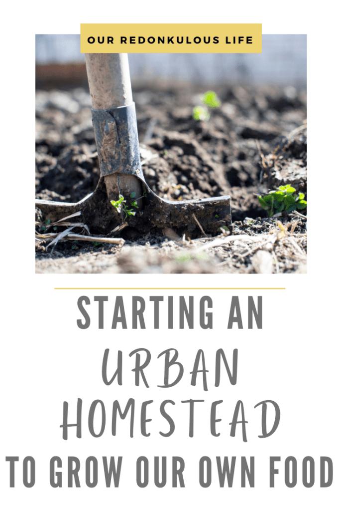 Starting-an-urban-homestead-journey